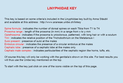 Linyphiidae key based on genitals