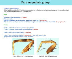 Key of pullata group